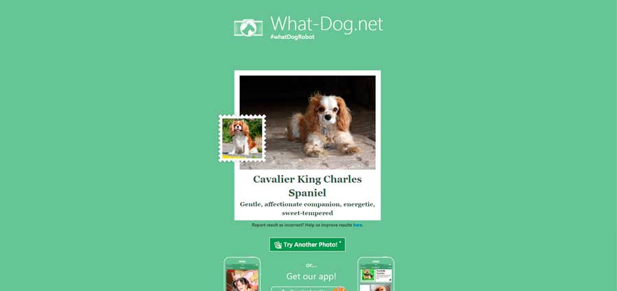 what-dog.net